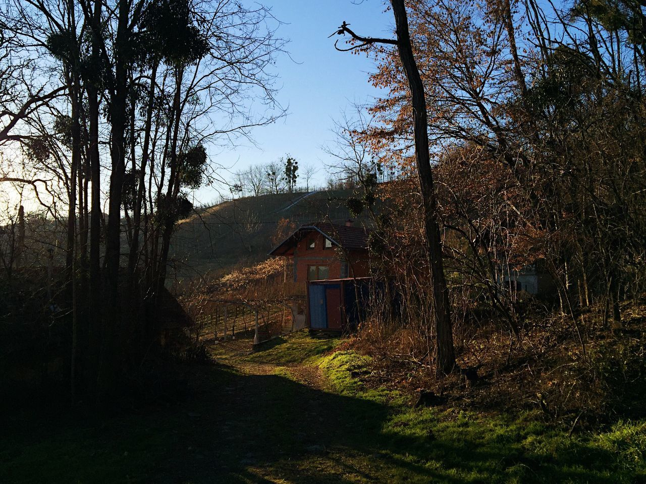 Magic hour at Lendavske Gorice, Slovenia, 2016. Lendava Lendavske Gorice Slovenia Landscape Nature Vineyard Tree Magic Hour & Weather Magic Hour Forrest Outdoors Winter Afternoon Light And Shadow Vinery
