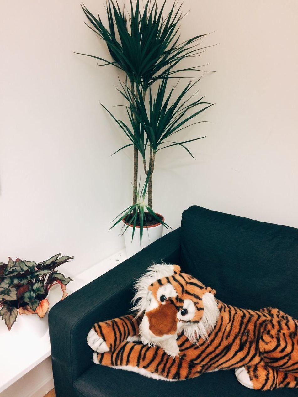 Beautiful stock photos of tiger, Animal Markings, Animal Representation, Berlin, Childhood