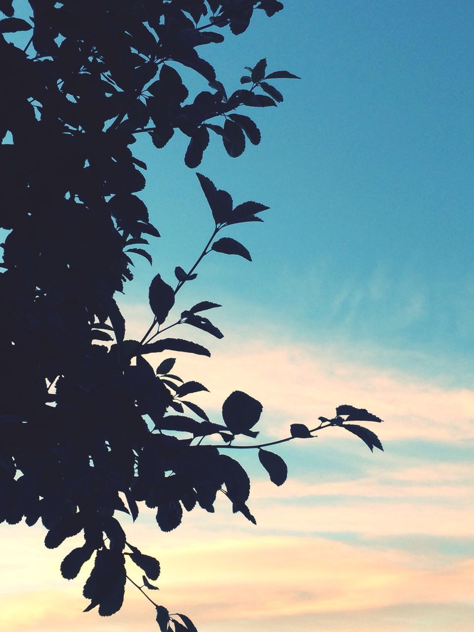 growth, tree, sky, nature, beauty in nature, leaf, low angle view, sunset, no people, outdoors, plant, day, scenics, close-up