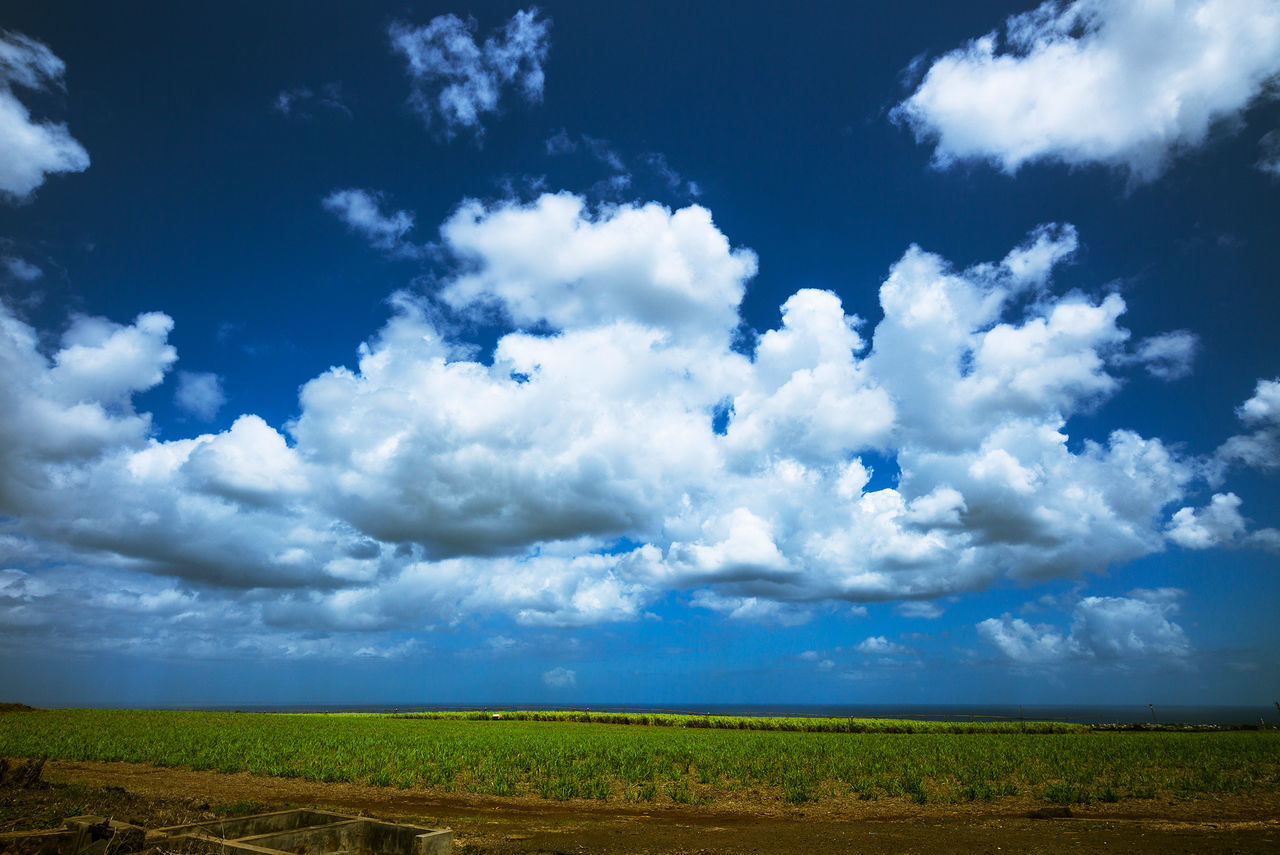 nature, beauty in nature, sky, field, landscape, cloud - sky, scenics, tranquility, day, tranquil scene, agriculture, no people, growth, outdoors, blue, rural scene