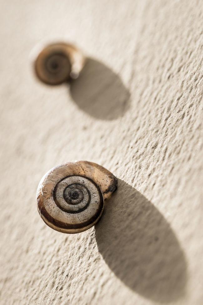 Sunbathe Brown Cg  Close-up Macro Seemore Seemorecg Snail Snails Sun Sunbathe Sunlight Water