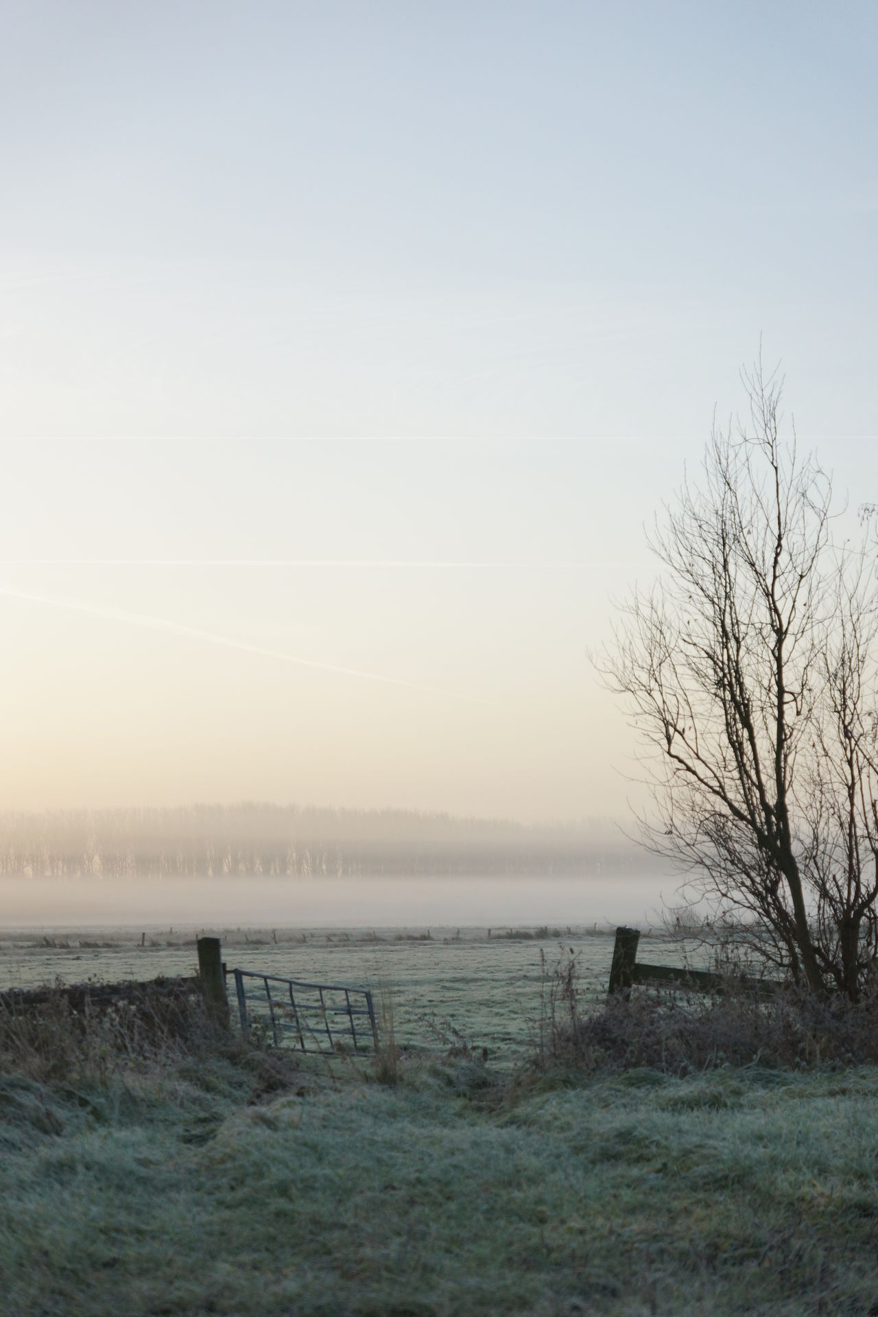 Winter pasture Bare Tree Beauty In Nature Clear Sky Day Field Fog Foggy Frost Gate Grass Haze Landscape Meadow Morning Morning Light Nature No People Outdoors Scenics Sky Sunrise Tranquil Scene Tranquility Tree Winter