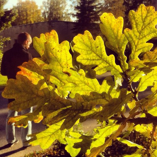Autumn Walk Streetphotography