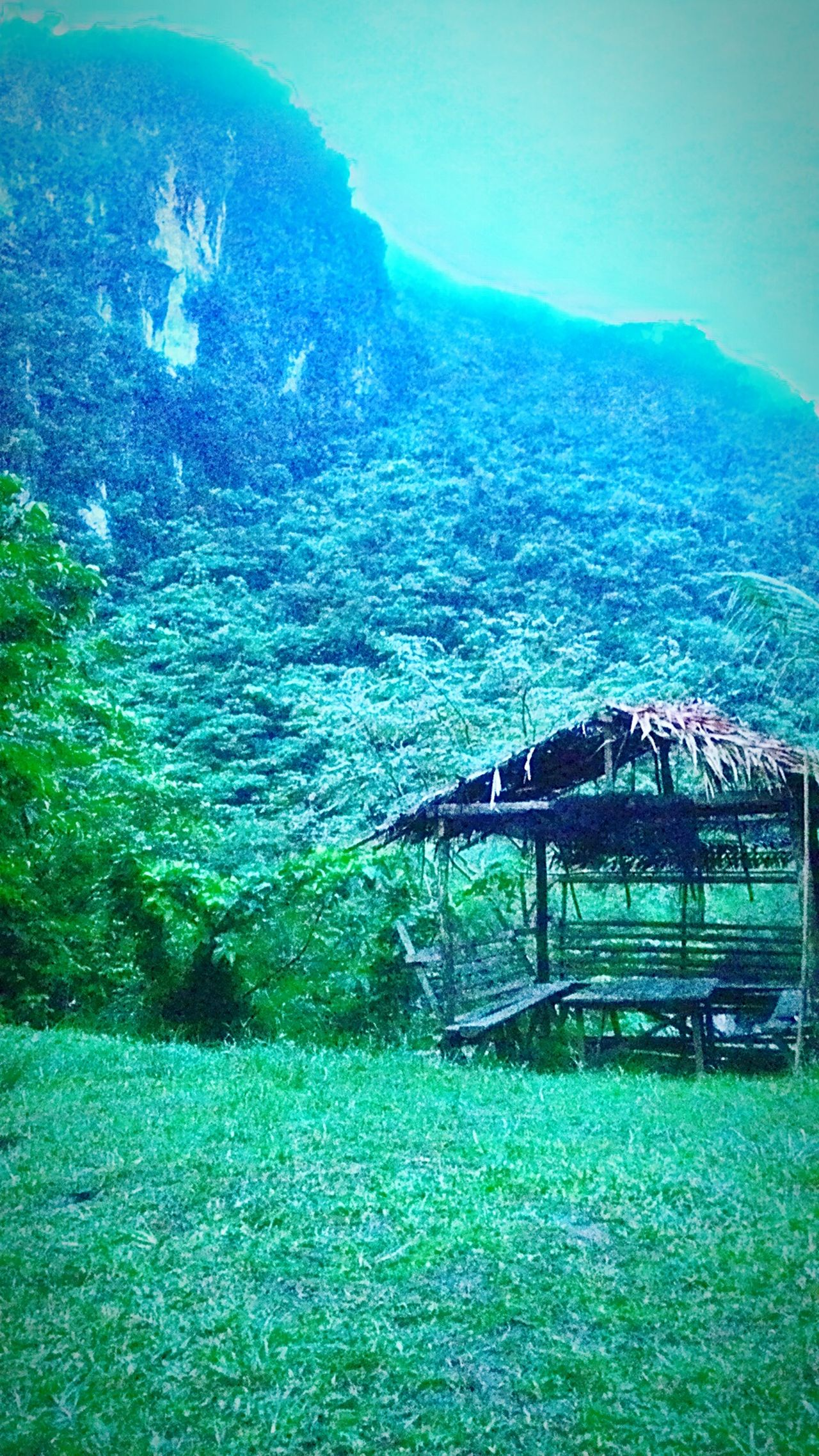 Nature On Your Doorstep Enjoying Life Mountain View Mountaindew  Green Nature Nipahut Evergreen Adventure Camping Eyeem Philippines