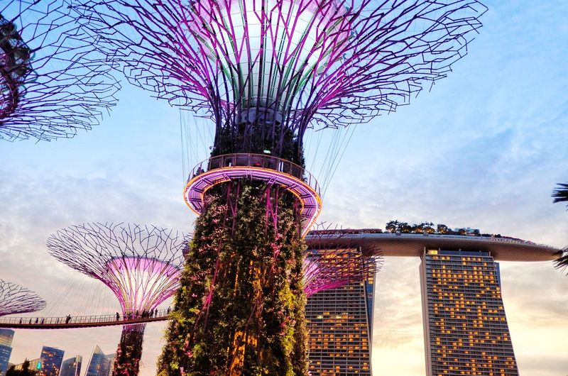 Garden by the Bay, Singapore 💕 sunset light in the darkness light and shadow gardenbythebay marinabaysands Singapore Low angle view sky Tree Architecture built structure building exterior flower no people Cit EyeEmNewHere Be. Ready. City No People Flower Building Exterior Built Structure Architecture Tree Sky Low Angle View Singapore Marinabaysands Gardenbythebay Light And Shadow Light In The Darkness Sunset Be. Ready. EyeEmNewHere