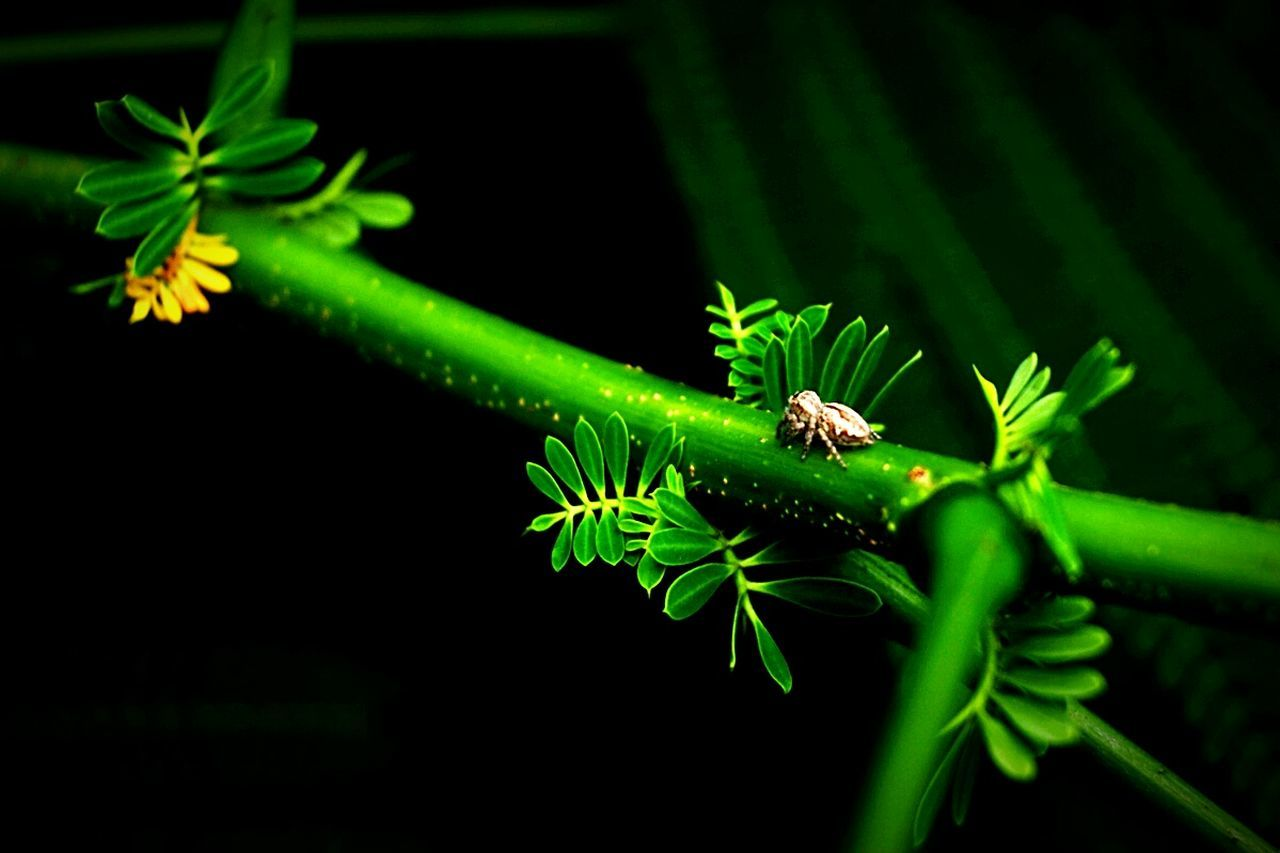 green color, one animal, leaf, insect, animals in the wild, animal themes, plant, animal wildlife, nature, growth, no people, close-up, outdoors, night, beauty in nature, fern, flower, fragility