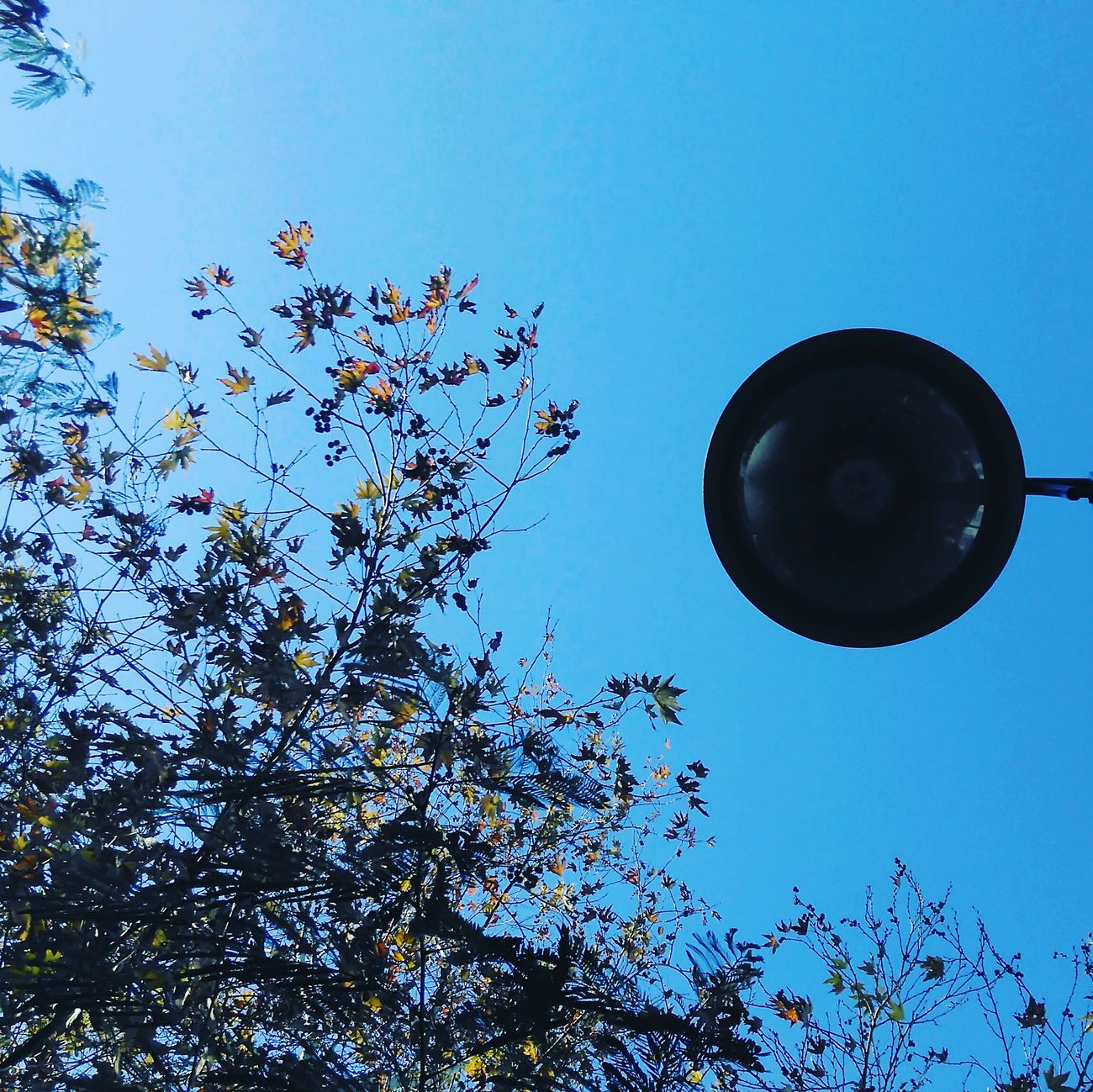 The dark light..Low Angle View Sky Flying Clear Sky Outdoors No People Day Nature Tree Moon Darkness And Light Dark Light Nature Photography Sundaymorning Silence Of Nature Urban Skyline Urban Exploration Urban Photography Streetphotography Blue Sky Blue Sky_collection Leaves And Sky Leaves