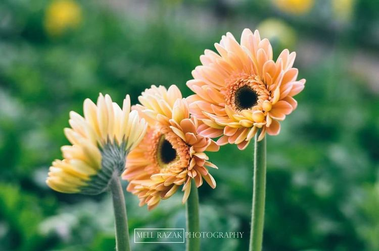 Flowers VSCO Vscocam Vscomalaysia Vscopahang Cameron Highlands Cameronhighlands Vscoperak Vscomalaysian Vscomalaya