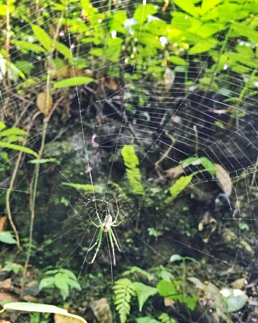 spider web, spider, fragility, web, nature, close-up, outdoors, day, no people, focus on foreground, plant, animal themes, beauty in nature, growth, freshness