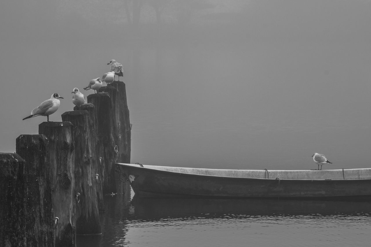 Seagulls in hazy conditions. Fresh On Eyeem  Hazy Days Misty Animal Themes Animal Wildlife Animals In The Wild Beauty In Nature Bird Boat Day Fog Fujifilm Mooring Post Nature No People Outdoors Perching Seagull Water Waterfront Shades Of Winter