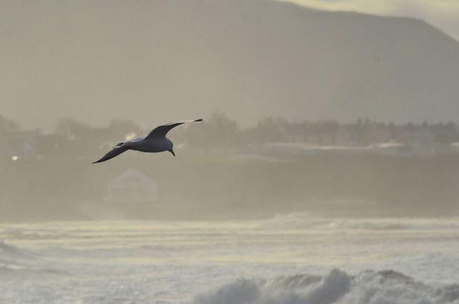 Sea And Sky EyeEm Birds Ireland