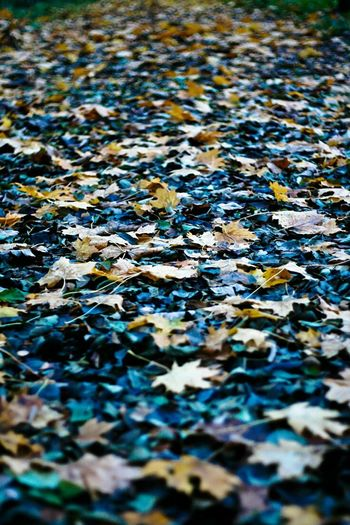Backgrounds Full Frame No People Outdoors Water Textured  Day Close-up Nature Leaf Autumn Colours Of Nature The Great Outdoors - 2017 EyeEm Awards
