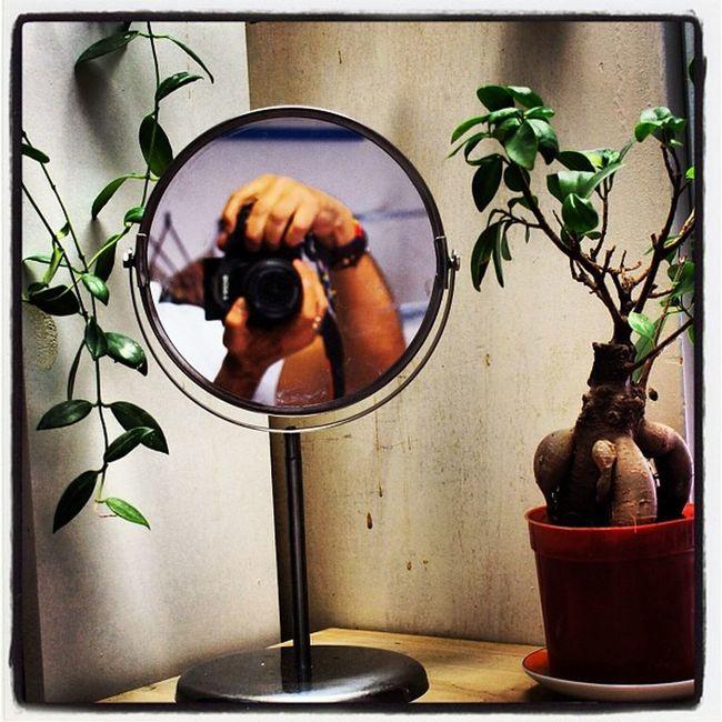 #specchio #beatyful #pianta #scatto #scatto Awesome Turkey Instamood Igers Gf_turkey Instagramhub Tagstagram Igersistanbul Pianta Specchio Scatto Nature Beatyful Holiday Igofttheday Autumn Winnergram Nice Bestageam Istanbul Traverl