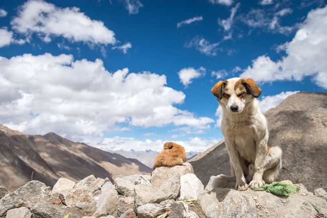 Beauty In Nature Blue Blue Sky Blue Sky And Clouds Cloud Cloud - Sky Day Dog Himalayan Range Himalayan Road Himalayas India Landscape Leh Ladakh.. Mountain Nature No People Outdoors Rock Rock - Object Rock Formation Scenics Sky Tranquil Scene Tranquility Market Reviewers' Top Picks Fresh On Market May 2016 Fresh On Market 2016