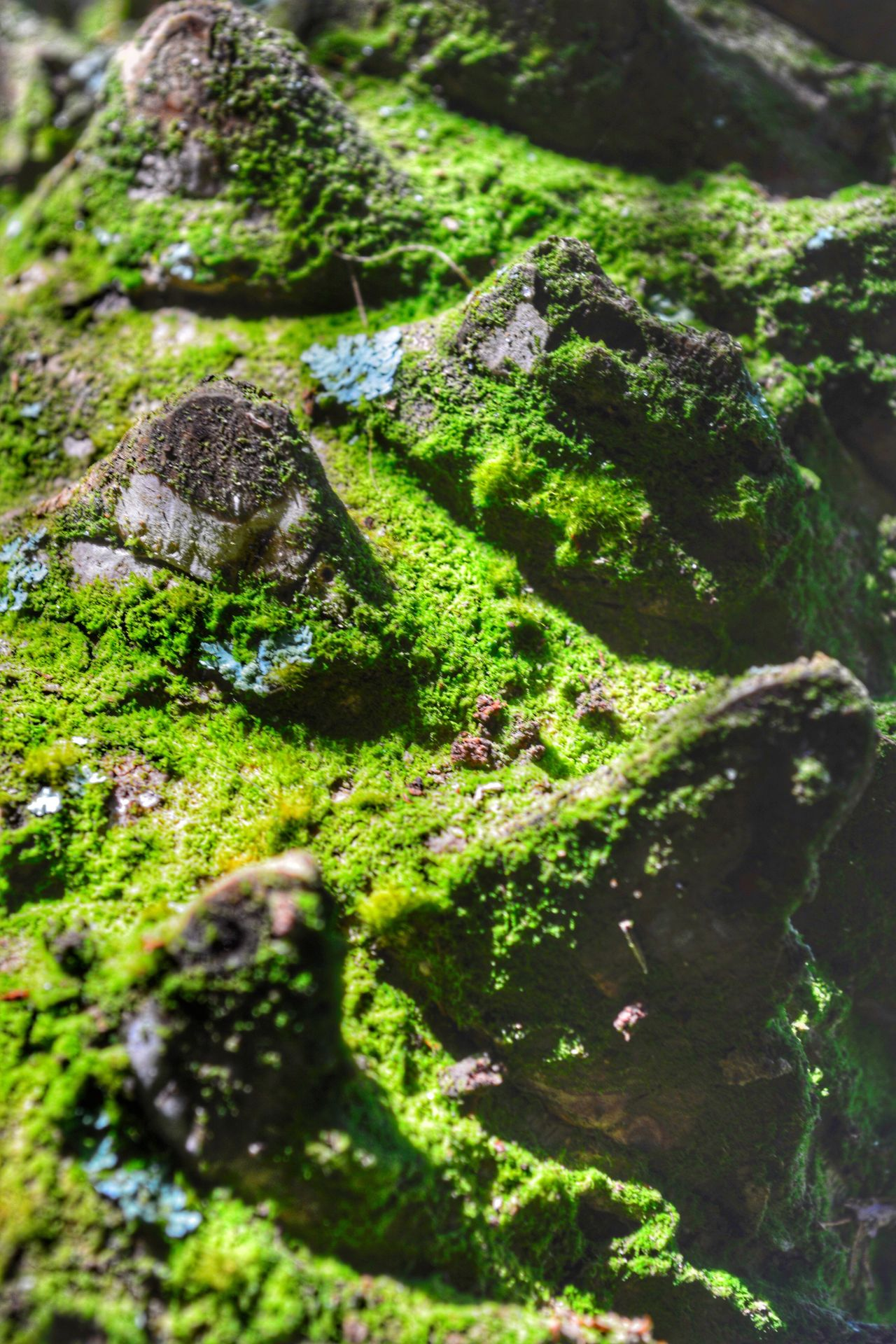 Imaginary Landscapes Miniature Mountains Green Color Moss Differential Focus Close-up It's Palm Tree Bark