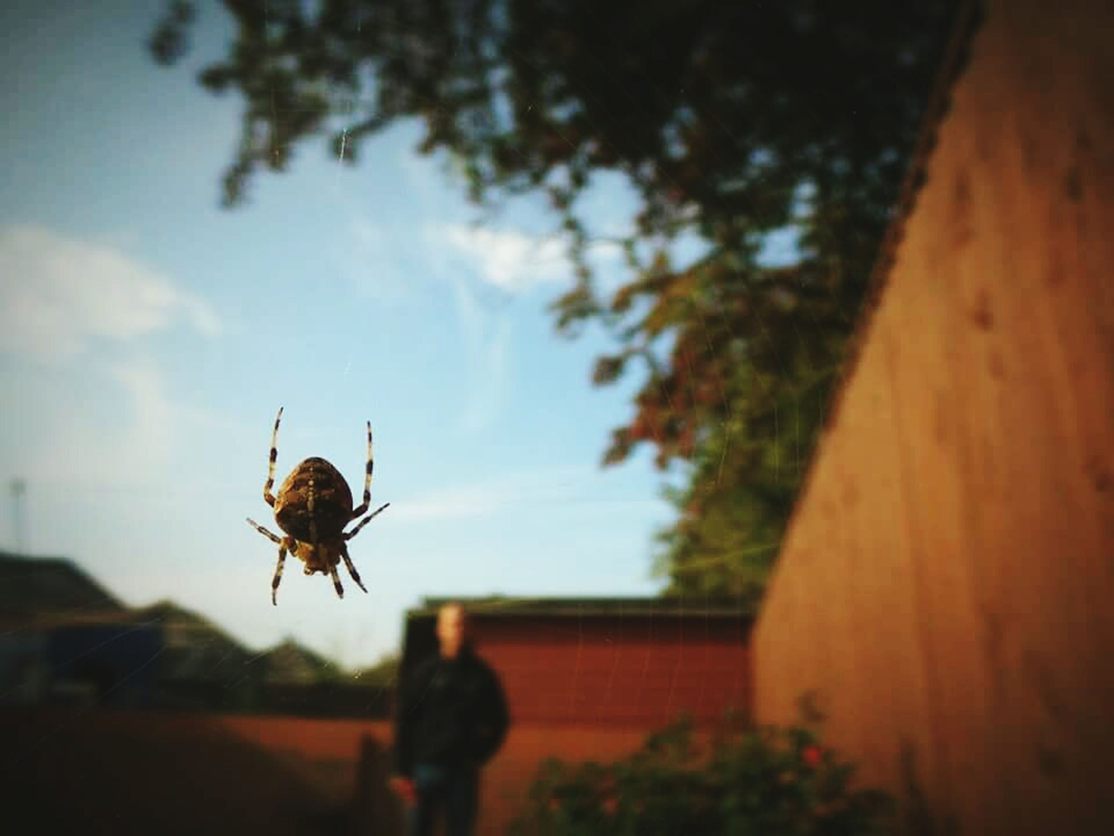 insect, animals in the wild, animal themes, one animal, wildlife, focus on foreground, selective focus, architecture, built structure, building exterior, flying, day, close-up, outdoors, low angle view, full length, two animals, sky, spider, mid-air