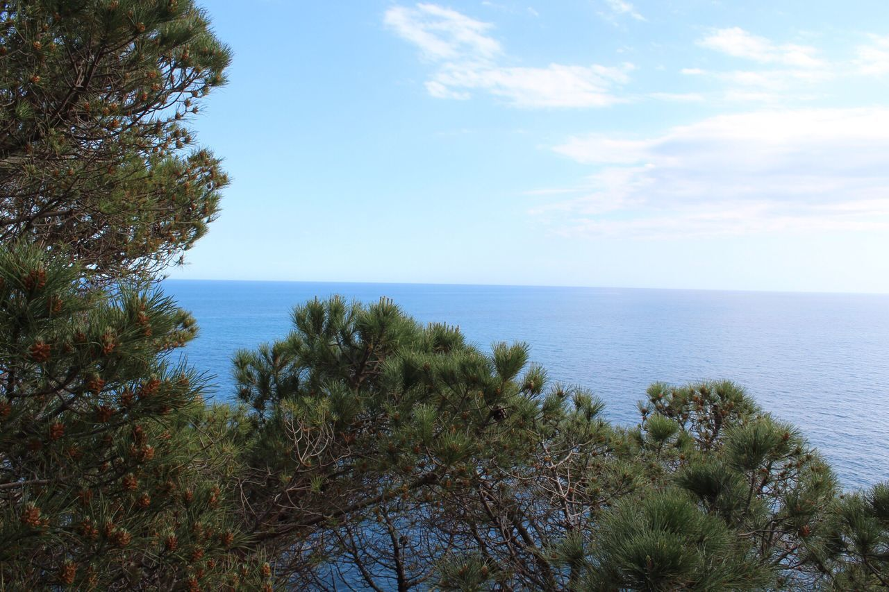 The Great Outdoors - 2017 EyeEm Awards Costa Brava Gironamenamora Sea Horizon Over Water Nature Water Beauty In Nature Tranquil Scene Scenics Tranquility Sky Tree Beach Day Growth Outdoors No People Plant Blue Scenery