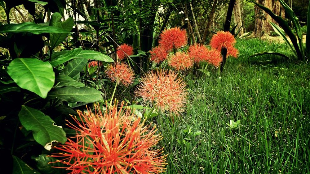 Nature That's Me Eyem Best Edits Eyemnaturelover Nafure Lover Naturephotography Flowers Flowers,Plants & Garden
