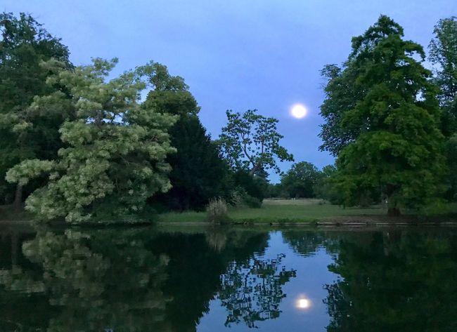 Bois De Boulogne Full Moon