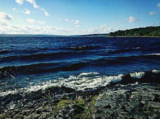 See Forest Laguna Lake