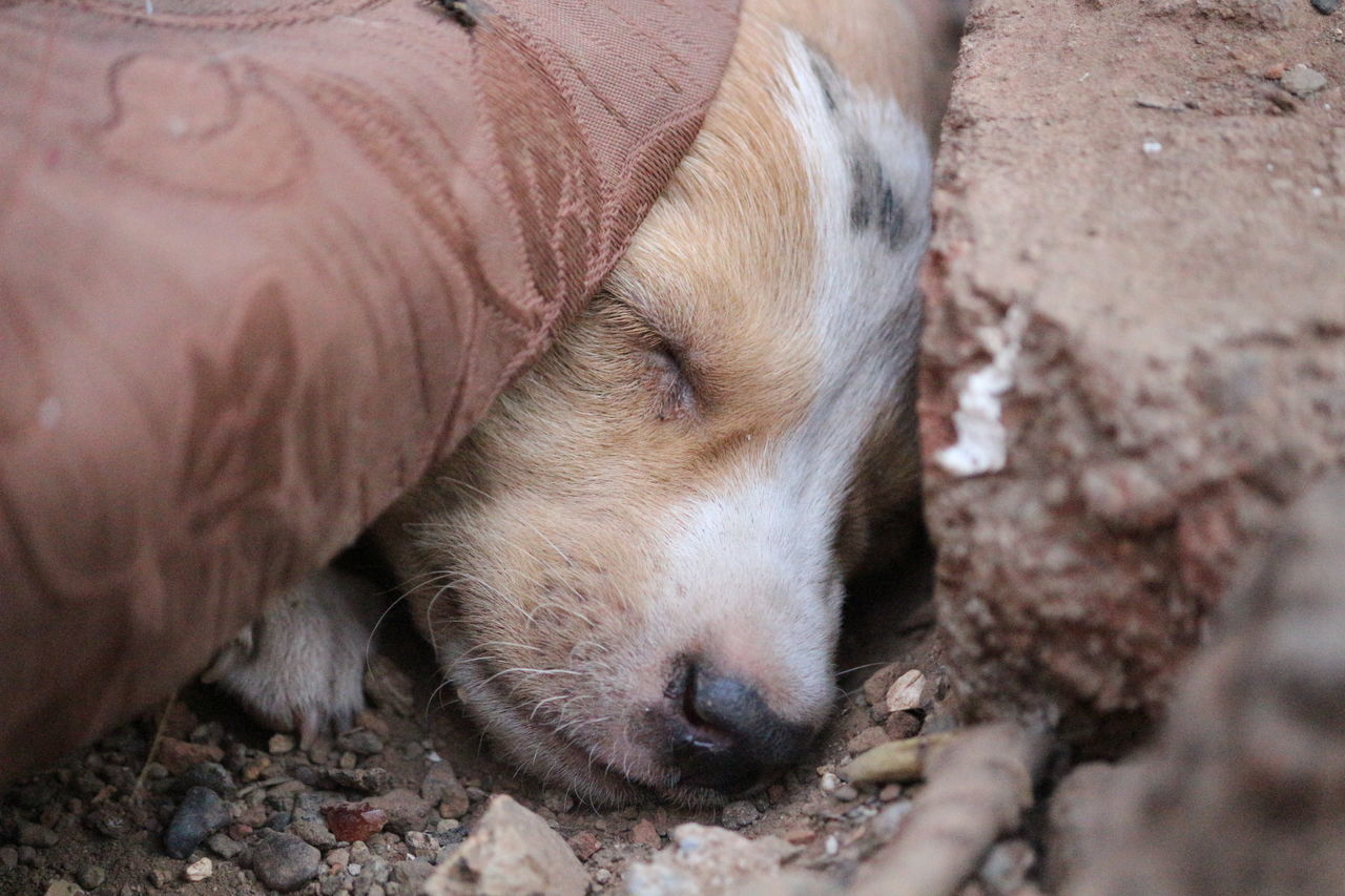 one animal, mammal, animal themes, sleeping, dog, animal, pets, lying down, close-up, no people, outdoors, cute, day, young animal, domestic animals, nature