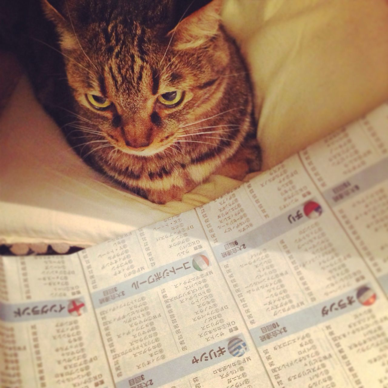 checking datas for FIFA World Cup 2014 Hello World Worldcup Cat Check This Out