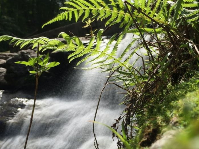 Life in the waterfall Beauty In Nature Botany Branch Close-up Day Focus On Foreground Forest Fragility Green Green Color Growing Growth Leaf Nature New Life No People Non-urban Scene Outdoors Plant Plant Life Scenics Stem Tranquil Scene Tranquility Waterfall