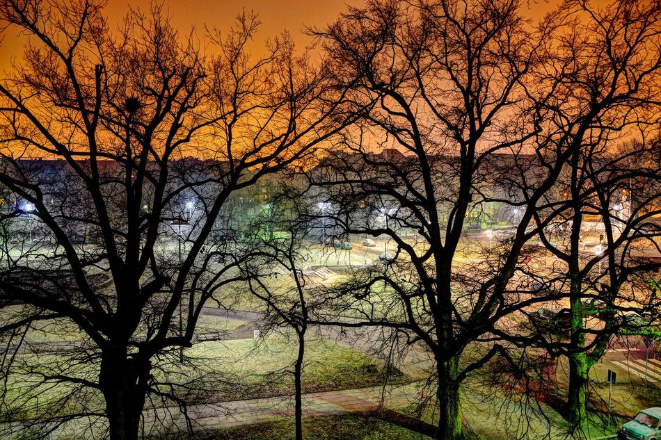 Nature Nightphotography Tree Beauty In Nature No People Outdoors Backgrounds Night Lights Nightlife Nightshot Night View HDR Hdrphotography HDRphoto HDR Collection Hdrimage EyeEmNewHere