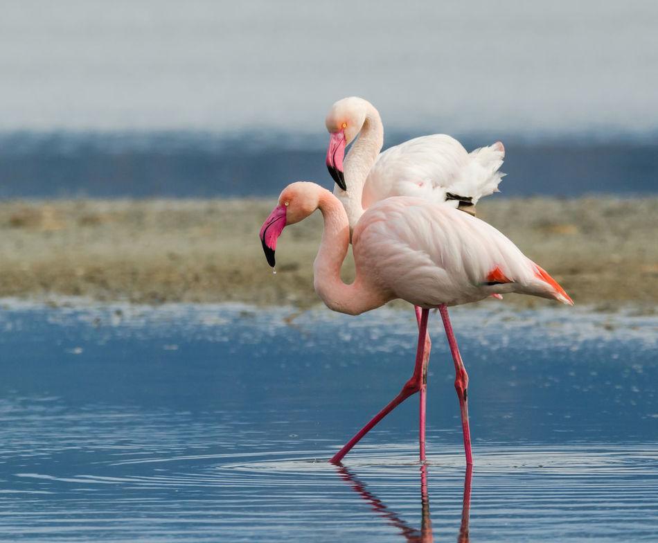Beautiful stock photos of wildlife, Animal Themes, Animals In The Wild, Beak, Bird