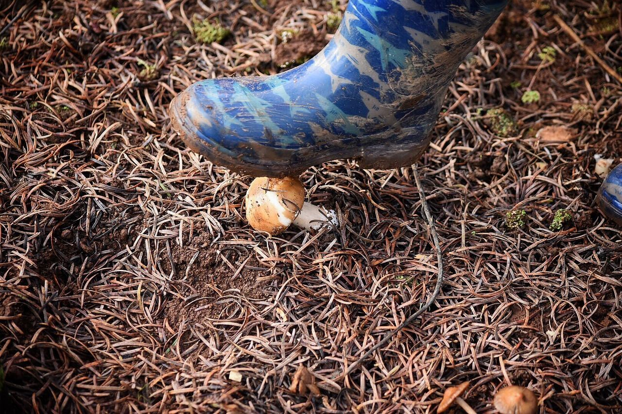 Mushroom_pictures High Angle View Moisture Christmas Tree Farm Looking Down Outdoor Photography Mushroom Mushrooms Cold Temperature Rubber Boots Boots Child Steps Field Agriculture Nature Outdoors Day