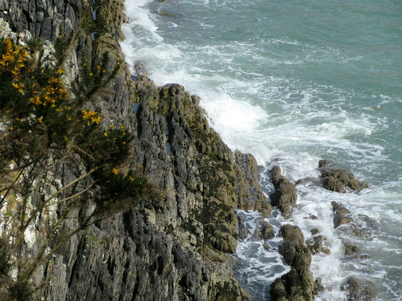 From the clifftop Cliff Cliffs Clifftop Cliff Face Waves Crashing On Rocks Rough Sea Gorse Bush Glandore, Ireland West Cork Wildatlanticway Ireland
