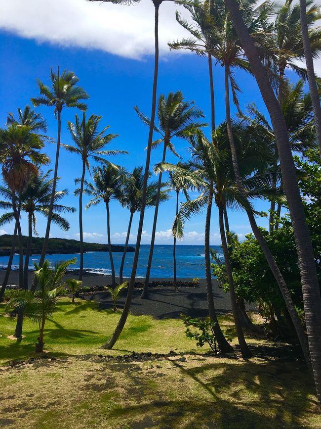 Ocean View Ocean Views Palm Tree Palm Trees Ocean Oceanside Sea Sea View Sea Views Ocean Blue Coast Coast Line  Coastline Coastal Tropical Paradise Island View  Tropical Island Hawaii Hawaii Coastline