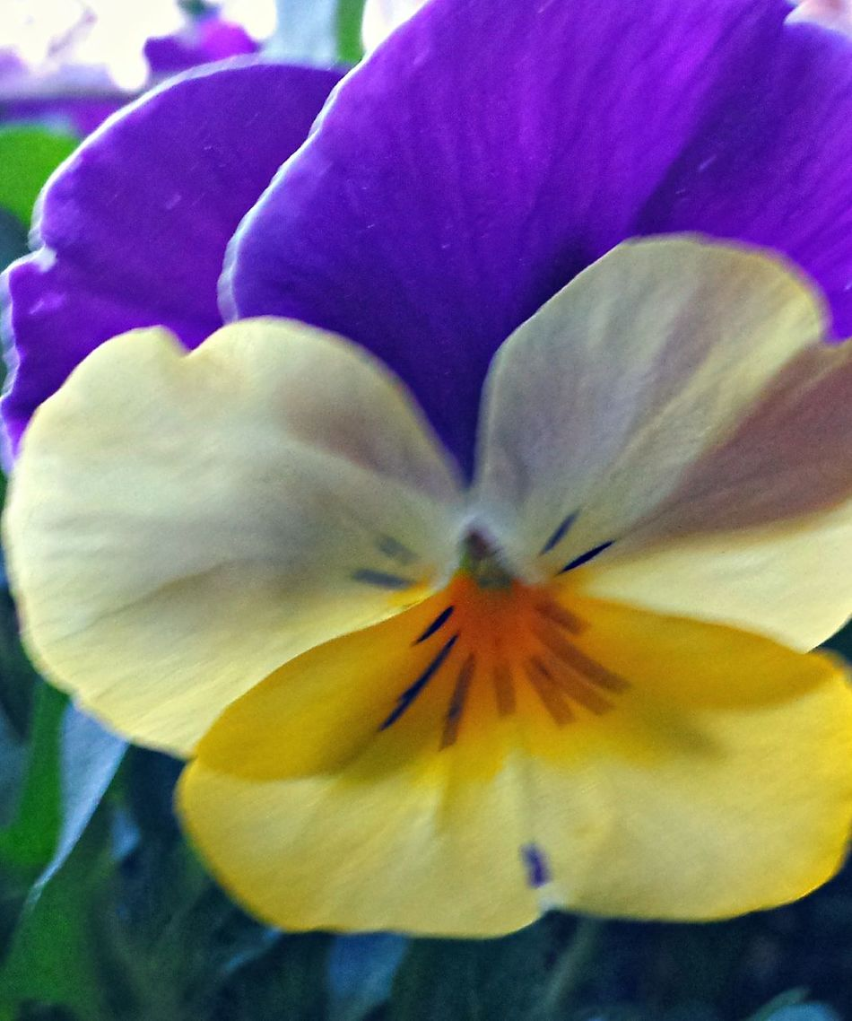 This is my thank you for all the support Instagram #followme #follow #eyeem #awesome #streamzoo #instahub #photo #sigueme #followhim #cute #follow4follow F4f Followback [ Flower Flower Art Heartflowers fowlers flowerforyou popular