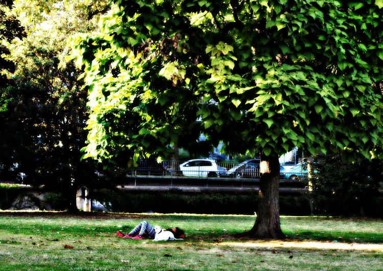 Let's Have A Break Woman with Big White Dog Lying On The Grass City Life Urban Lifestyle One Animal Growth Citypark tranquility Green Color Plants And Trees Lawn Outdoors Day Solitude Tranquil Scene Nature Footpath Dogs Scenics People And Places Riverside Frankfurt Am Main Germany🇩🇪 Enjoy The New Normal Live For The Story