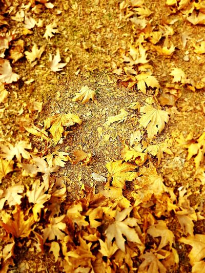 Nature Leaf Beauty In Nature High Angle View Autumn Change Backgrounds Maple Leaf Dry Leaf Dry Season Real Gold ;)