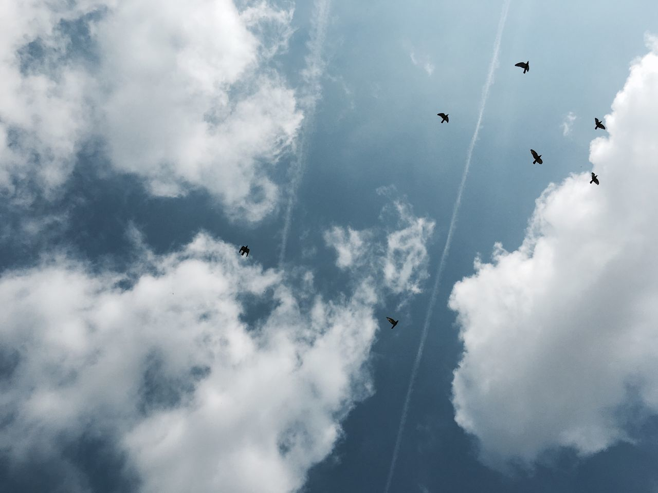 Flying Low Angle View Cloud - Sky Mid-air Sky Bird Nature Day Outdoors Animal Themes Flock Of Birds Beauty In Nature Animals In The Wild Spread Wings Scenics Large Group Of Animals No People