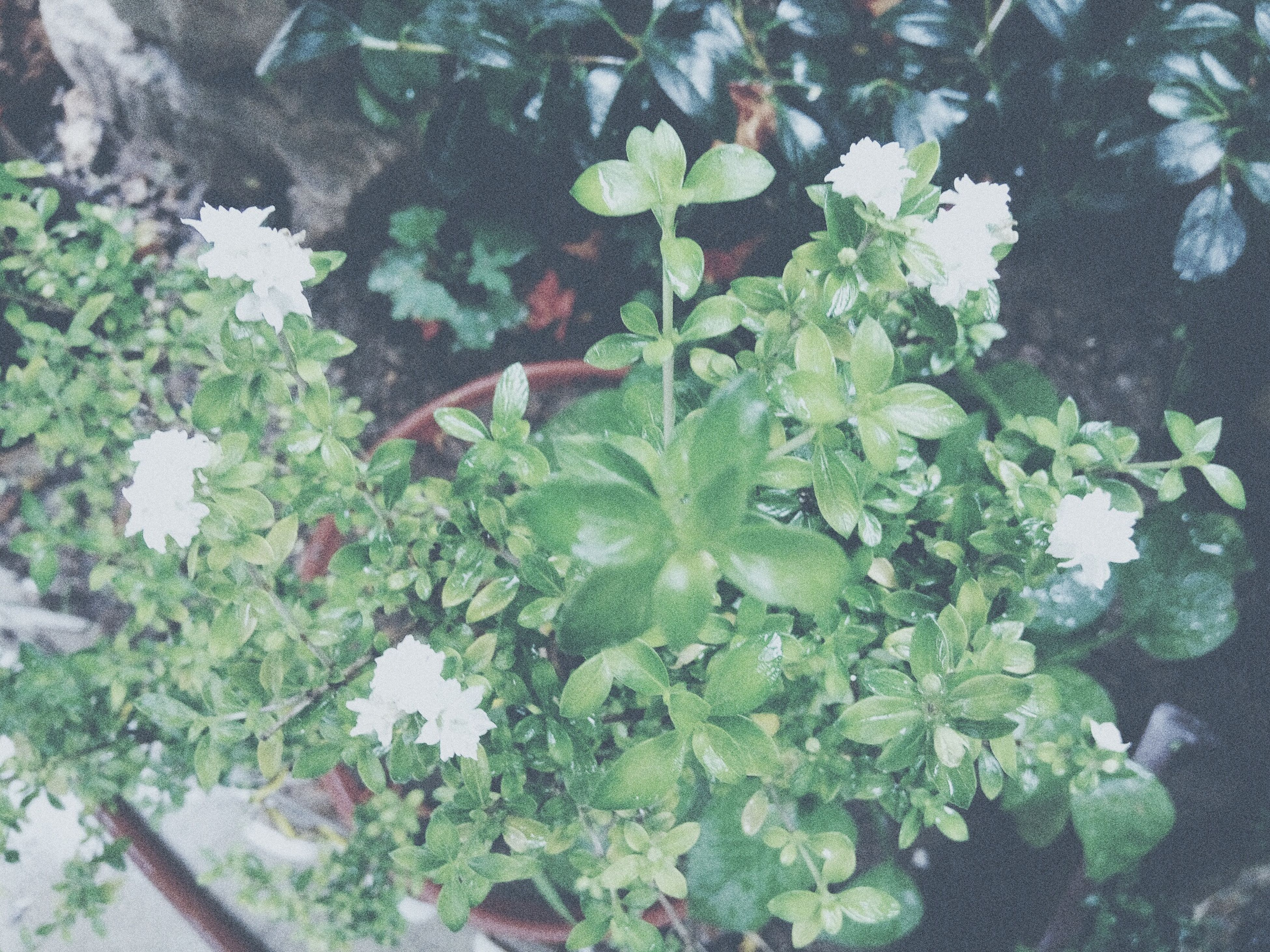 growth, leaf, plant, green color, nature, freshness, flower, growing, beauty in nature, fragility, close-up, day, outdoors, no people, botany, tranquility, blooming, stem, green, in bloom