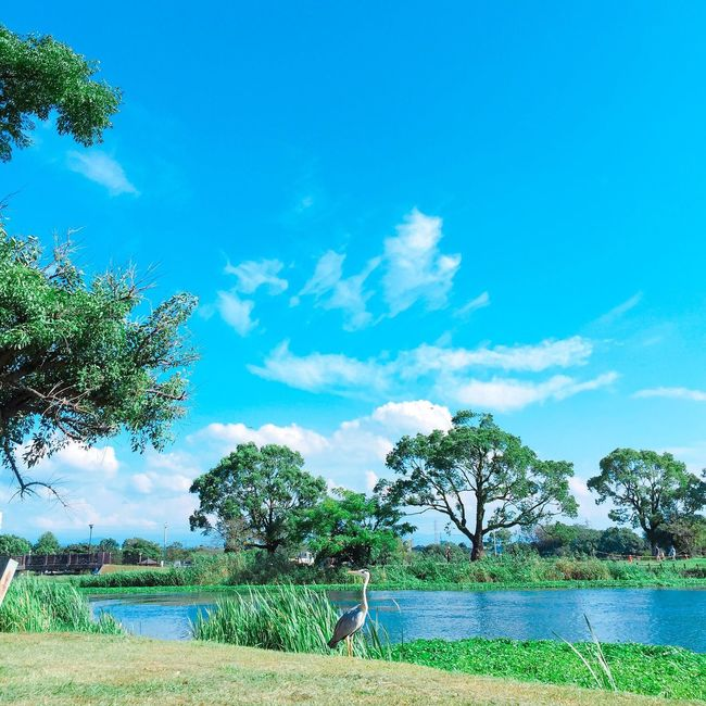 Lake Blue Sky Lakeshore Sunny Clouds And Sky Non-urban Scene Light And Shadow Streetphotography Snapshot Favorite Nature Outdoors IPhoneography Mobilephotography