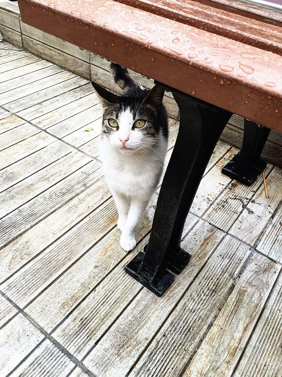 Cat Lovers Cat SeroPlatomyo First Eyeem Photo
