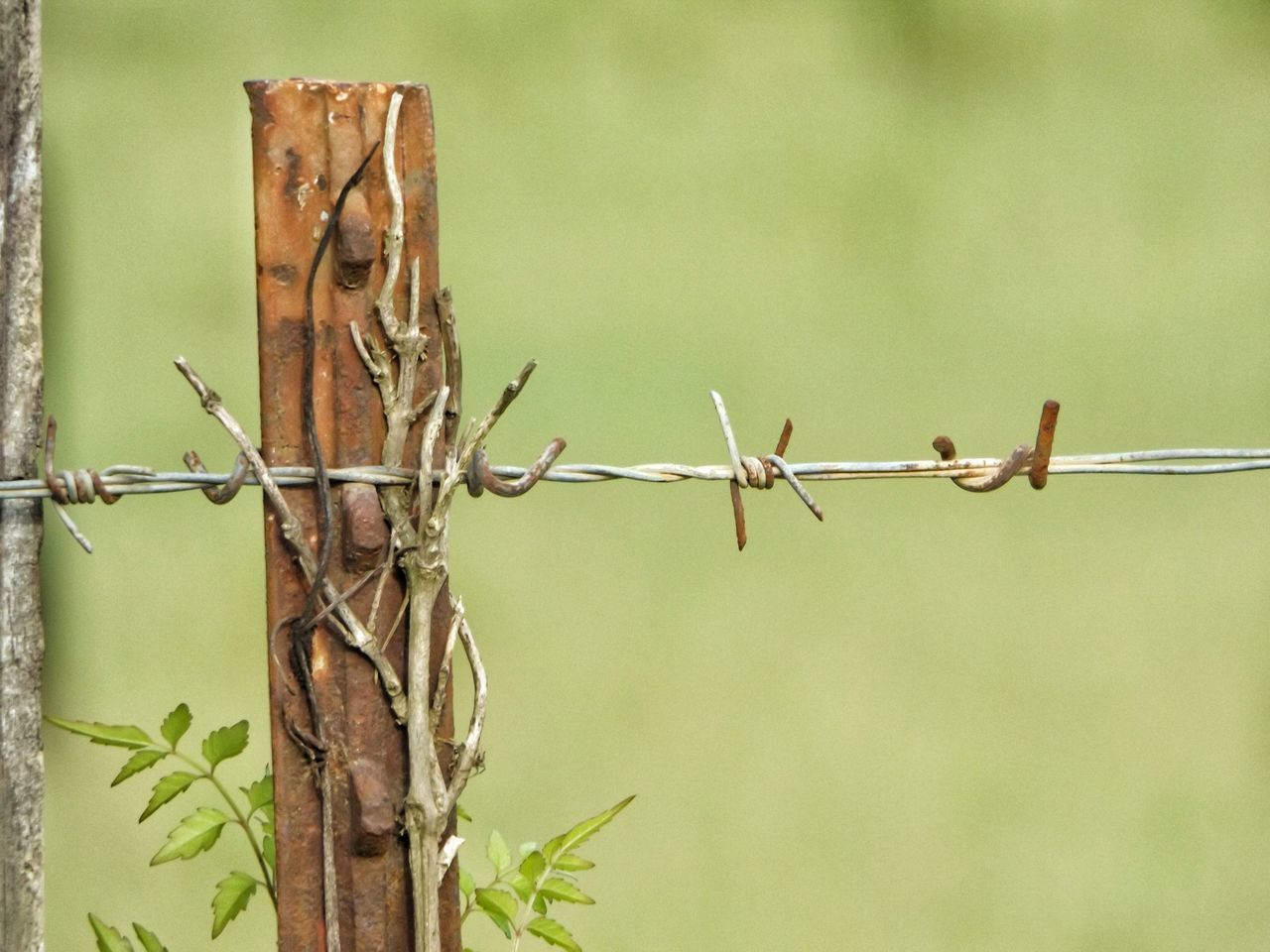 Barbed Wire Fence Barbed Wire Barbed Wire Fence Post Barbed Wire Close Up Barbed Wire Wednesday Barbed World Barbedwire Love Barbed Wires Farm Life Fencing Wire Showcase July