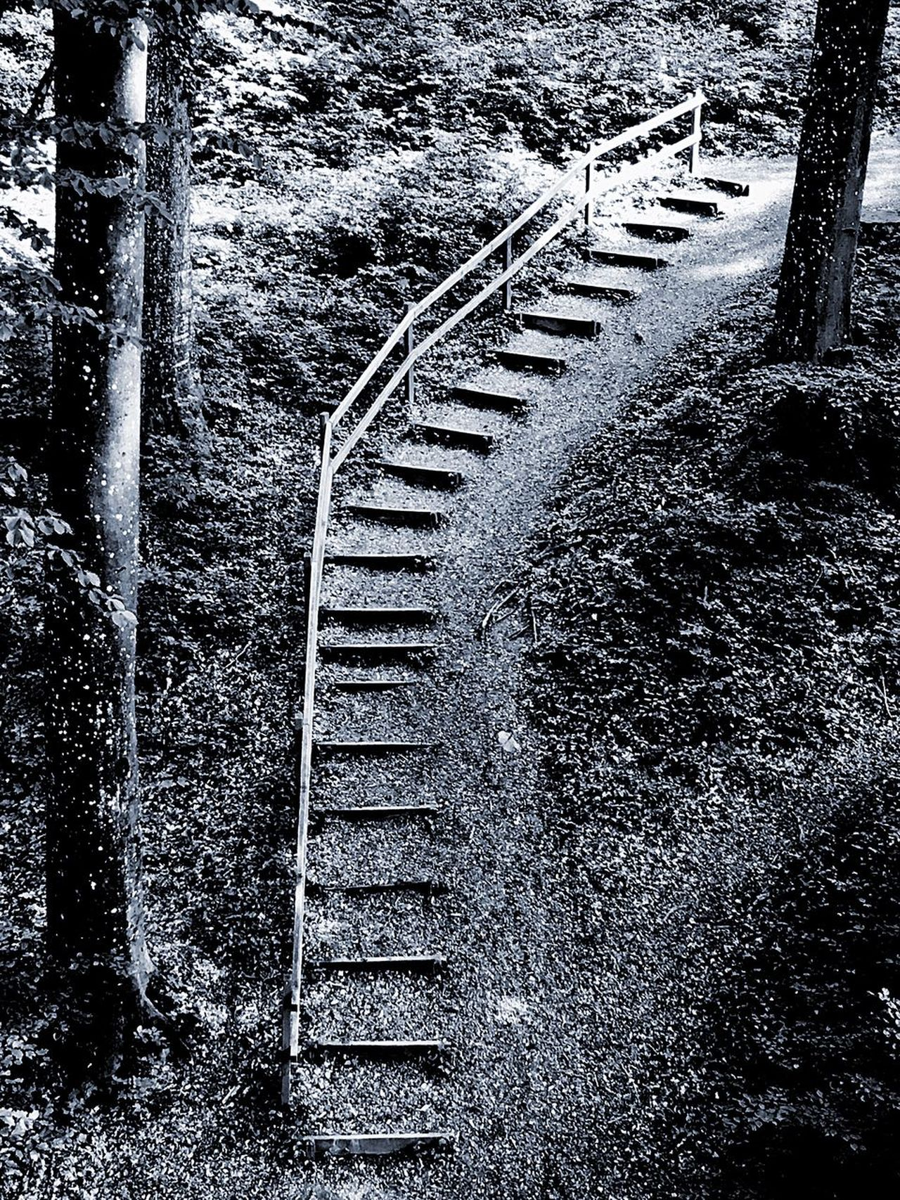 Steps Chemin Sentiero Sentier Outdoors No People The Way Forward Nature Beauty In Nature Black And White Noir Et Blanc Bianco E Nero Stonegraphix Tranquility The Great Outdoors - 2017 EyeEm Awards EyeEmNewHere