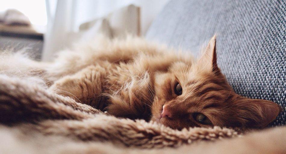 Beautiful stock photos of cat, Animal Themes, Brown, Cat, Close-Up