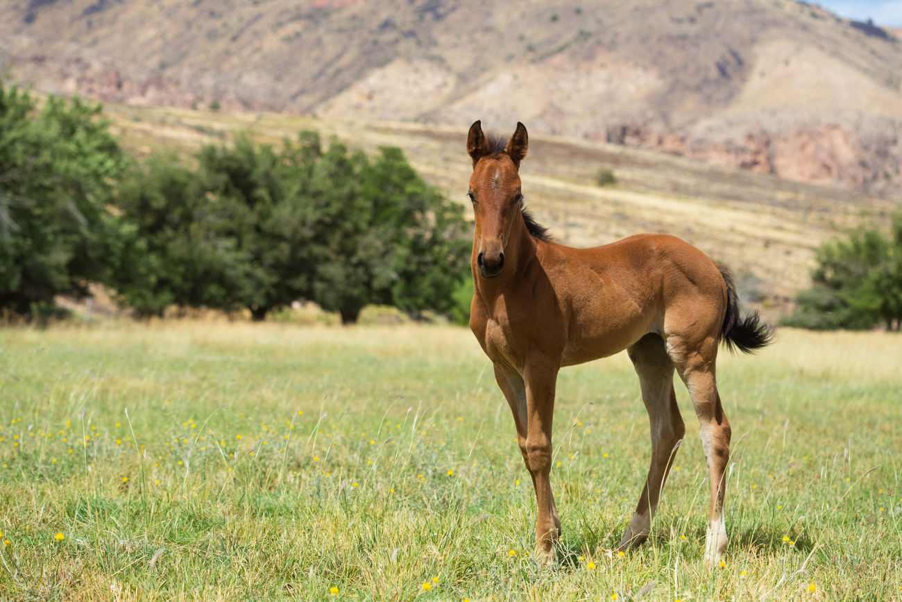 Foal in a field Horses One Animal Animal Mammal No People Baby Horse Foal In Field Farm On The Farm Nature Outdoors Landscape Baby Animals
