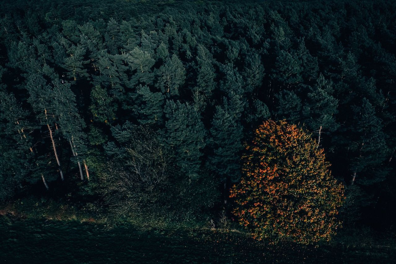 Tree Nature Forest Beauty In Nature Landscape WoodLand Outdoors Tranquility Autumn Dji Drone  Dronephotography Aerial View Aerial Shot EyeEm Gallery EyeEm Best Shots EyeEm Nature Lover EyeEmBestPics OpenEdit Check This Out Season  Woods Autumn Leaves Autumn Colors Autumn🍁🍁🍁