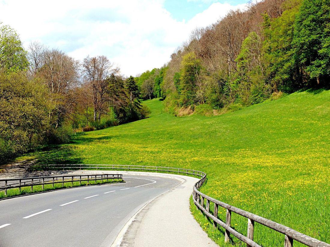 Road to Vaduz Castle. Road Tree Sky Nature Outdoors Landscape Scenics Grass Beauty In Nature Curve EyeEm Travel Destinations Liechtenstein Vaduz Travel Tourism Europe The Great Outdoors - 2017 EyeEm Awards