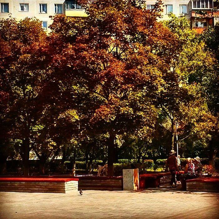 Скоро осень?? , деревья уже начинают меня окраску?? August Soonautumn Summer14 Tree colorscityrussiamoscowtagsforlikes@tagsforlikesfollowmesfsvscovscocamvsco_goodvsconaturevscomoscowvscoxvscovscorussiavscobestvscosummerbestofvscoinstagraminstagoodlikeforlikelike4likeinstabestvscoonly