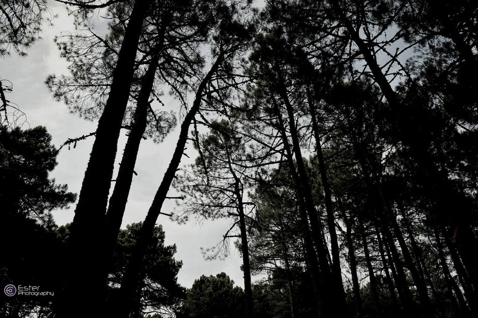 I love forest. Españoles Y Sus Fotos Look Up Eye4photography  Forest Of Lost Souls