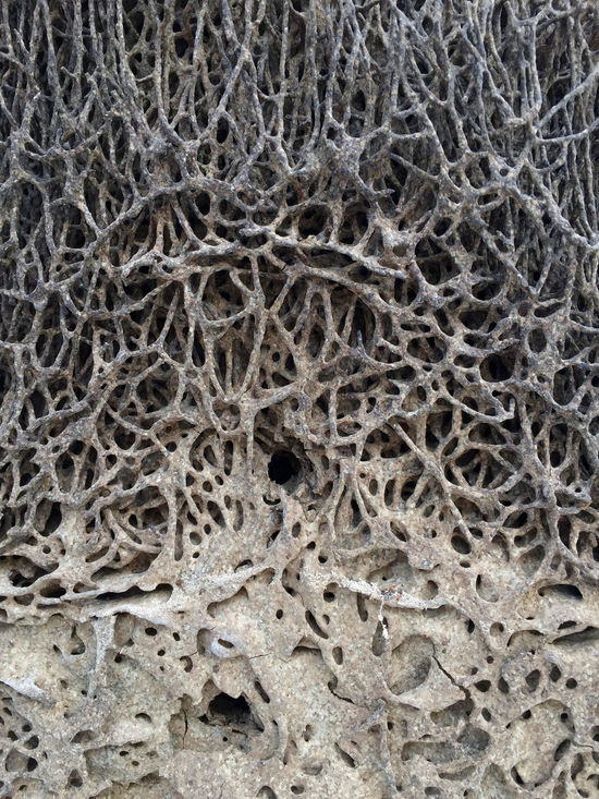 Abstract Animal Animal Themes Background Background Texture Backgrounds Close-up Old Pattern Termite Termite Nests Termites' Home Textured