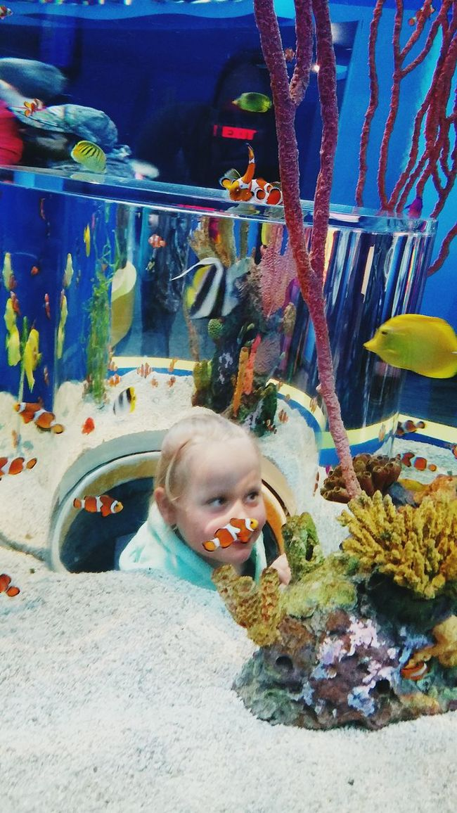 My daughter at The Aquarium of the Smokies in Gatlinburg Tennessee when we went on a vacation. Fish Tank Fish Tank. Girl Power Girlpower Amazing *-* Human Emotion Human Expressions Eyeem Market Team The 2016 EyeEm Awards Everyday Emotion Eyeem Market The Essence Of Summer- 2016 EyeEm Awards Eyeem Marketplace EyeEm Market © The Eyeem Award 2016 The Portraitist - 2016 EyeEm Awards Making Memories! :) Original Experiences Showcase June
