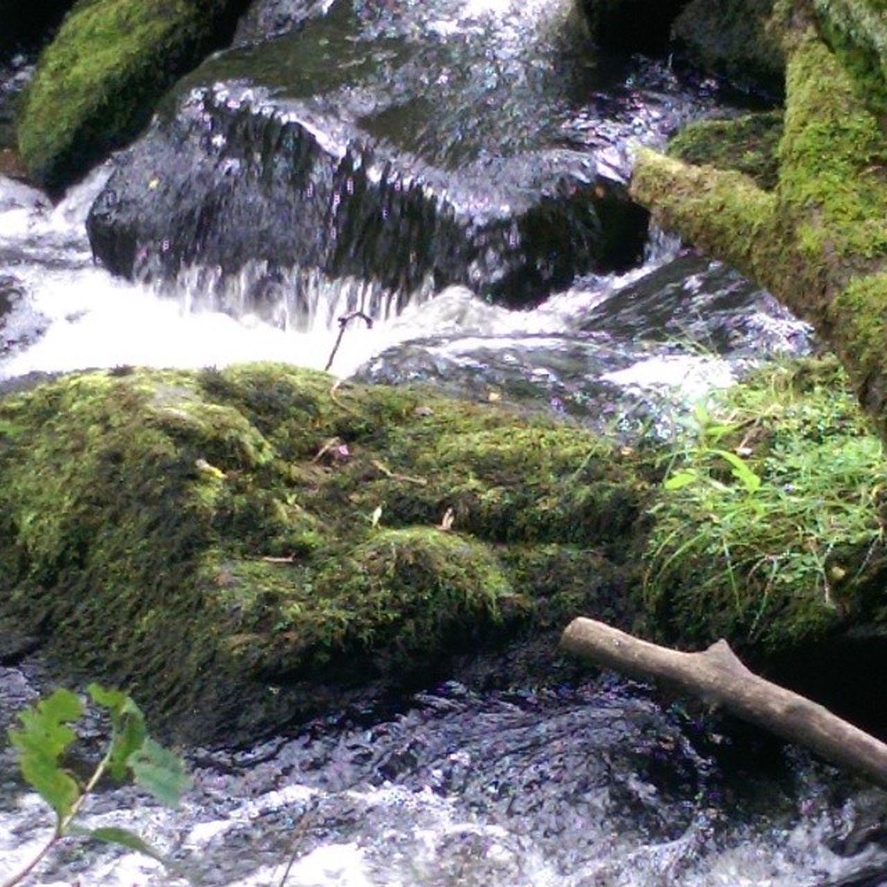 Stream Moss Water Rocks Ireland Nature Northernireland DiscoverNI
